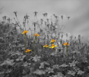 images de fleurs
